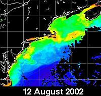 chlorophyll distribution north of the Gulf Stream on 12 Aug 2002