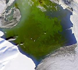 SeaWiFS view of plankton bloom in Ross Sea on 6 Dec. 2004