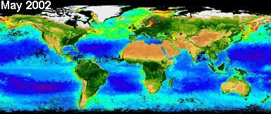 SeaWiFS Biosphere May 2002